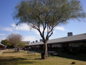 Vicki Lynne's Tree planted at Homer Davis Elementary School Arbor Day, 1985