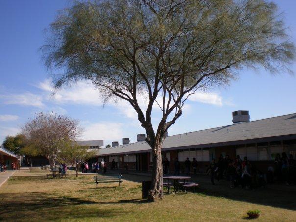 Vicki Lynne's Tree planted at Homer Davis Elementary School Arbor Day, 1985